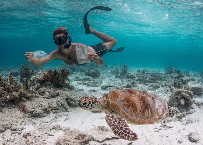 Thời điểm nên đi du lịch đảo rùa Selingan