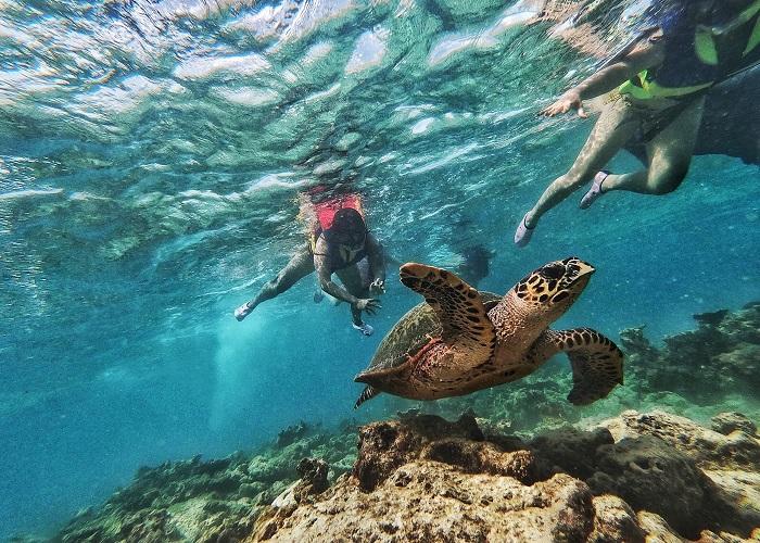 Lặn biển - Trải nghiệm thú vị khi du lịch đảo rùa Selingan