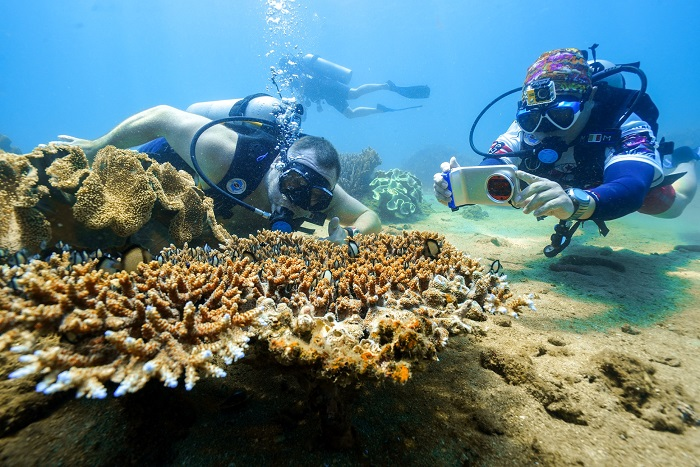 Lặn biển ngắm san hô - Trải nghiệm thú vị khi du lịch đảo rùa Selingan