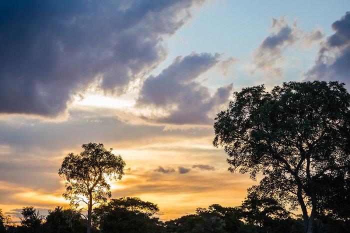 Hầu hết mọi người đến thăm Pantanal đều theo các tour du lịch có tổ chức - Du lịch Pantanal