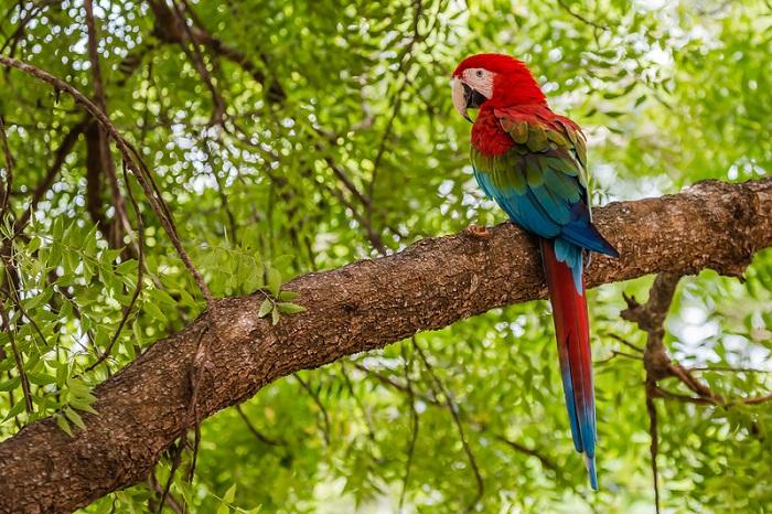 Xem động vật hoang dã có lẽ là hoạt động thú vị nhất ở Pantanal - Du lịch Pantanal