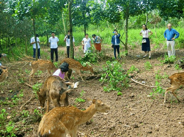 khu du lịch Đảo Yến Sơn Hà - khu động vật