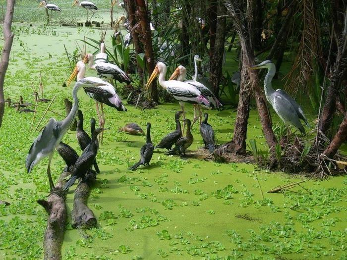 Ca Mau international eco-tourism area - bird sanctuary