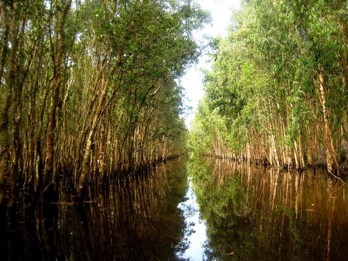 Ca Mau - U Minh Ha international eco-tourism area