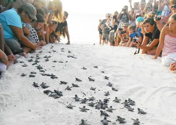 Kinh nghiệm xem rùa đẻ trứng ở Côn Đảo thú vị
