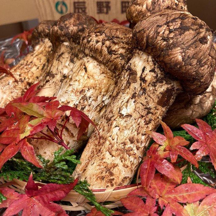 nấm Matsutake món ăn mùa thu trên thế giới
