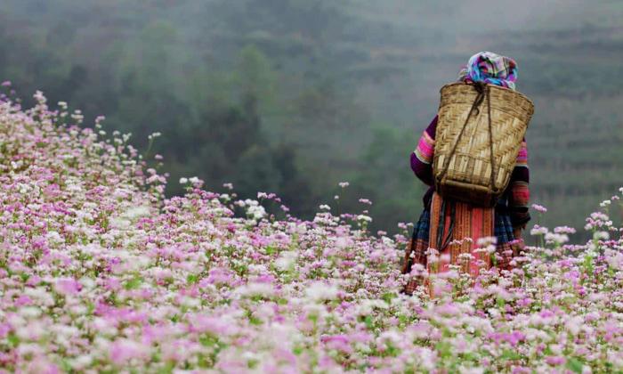 Tháng 10 nên du lịch ở đâu đẹp - hoa tam giác mạch