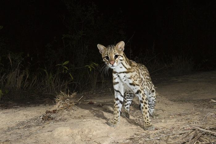 Trải nghiệm Night Safari  - Du lịch Pantanal