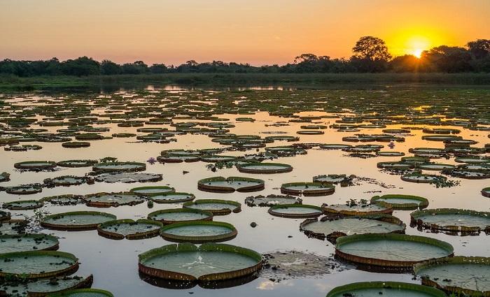 Nguyên sơ và phong phú về mặt sinh học - Du lịch Pantanal