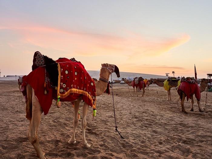 Cưỡi lạc đà là một trải nghiệm thú vị - Trải nghiệm cắm trại Ả Rập