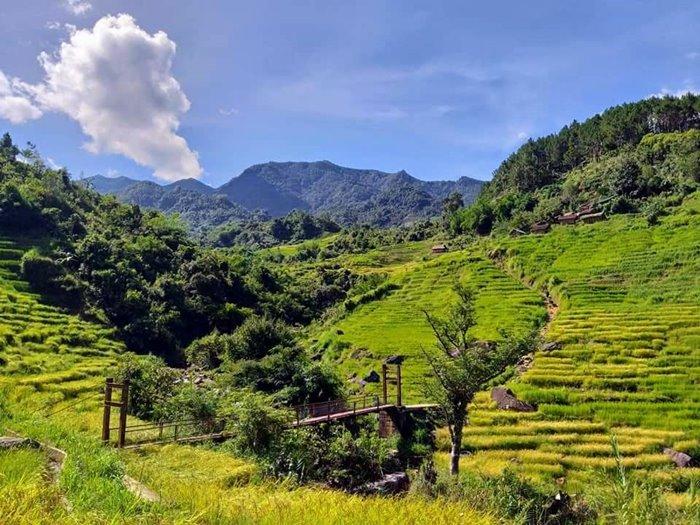TRAVEL Mang Ri terraced fields