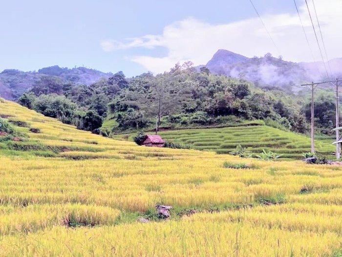 The scenery of Mang Ri Kon Tum terraced fields