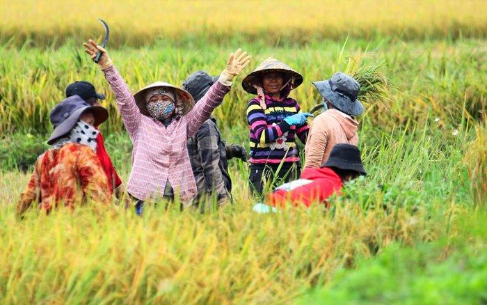 See the terraced fields of Mang Ri Kon Tum