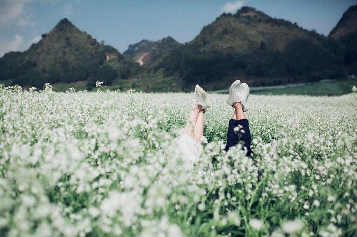 Tháng 10 nên du lịch ở đâu đẹp - mùa hoa cải trắng