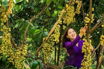 Ghé thăm vườn trái cây Gò Chùa Tây Ninh đi rồi chẳng muốn về