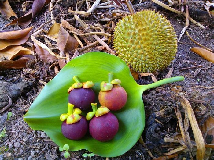 Go Chua Tay Ninh fruit garden - eat fruit