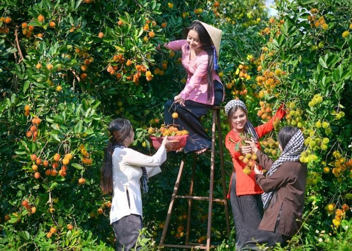 vườn trái cây Vàm Xáng Cần Thơ - miệt vườn trái cây xum xuê