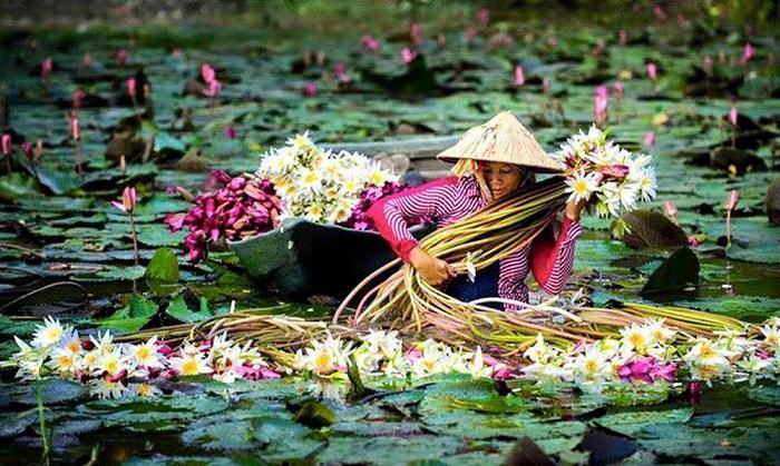 Tháng 10 Nên Đi Du Lịch Ở Đâu Việt Nam Để Hưởng Trọn Mùa Hoa Rực Rỡ?