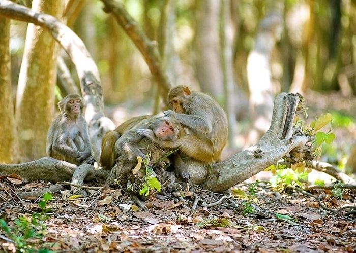 Tour du lịch Nha Trang 3N tham quan Đảo Khỉ