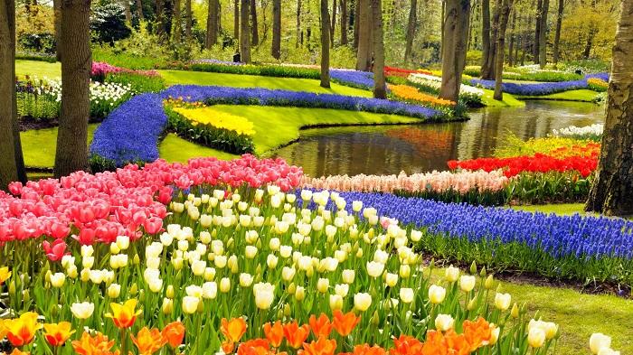 Địa điểm ngắm hoa tulip ở Hà Lan - công viên Keukenhof