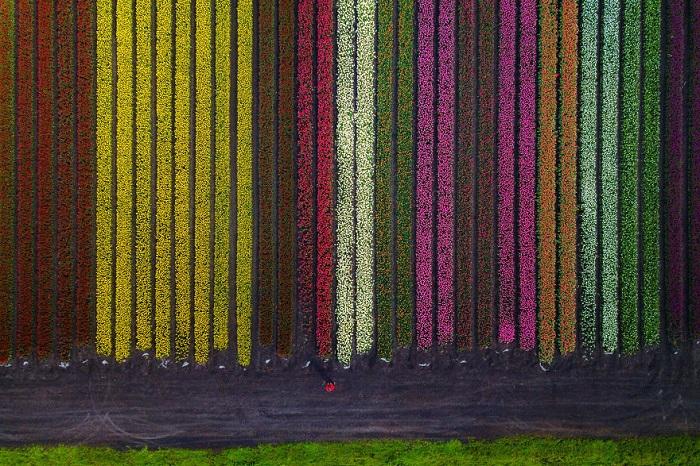 Địa điểm ngắm hoa tulip ở Hà Lan - ngắm hoa ở Lisse
