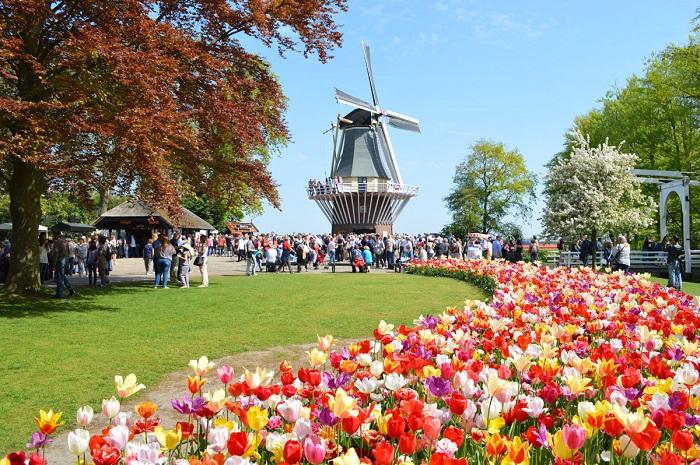 Địa điểm ngắm hoa tulip ở Hà Lan - lễ hội đặc sắc