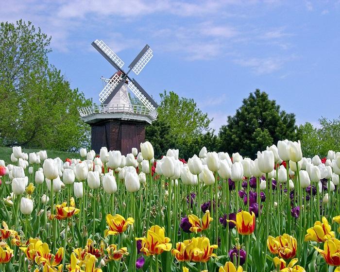 Địa điểm ngắm hoa tulip ở Hà Lan - thời điểm đẹp nhất