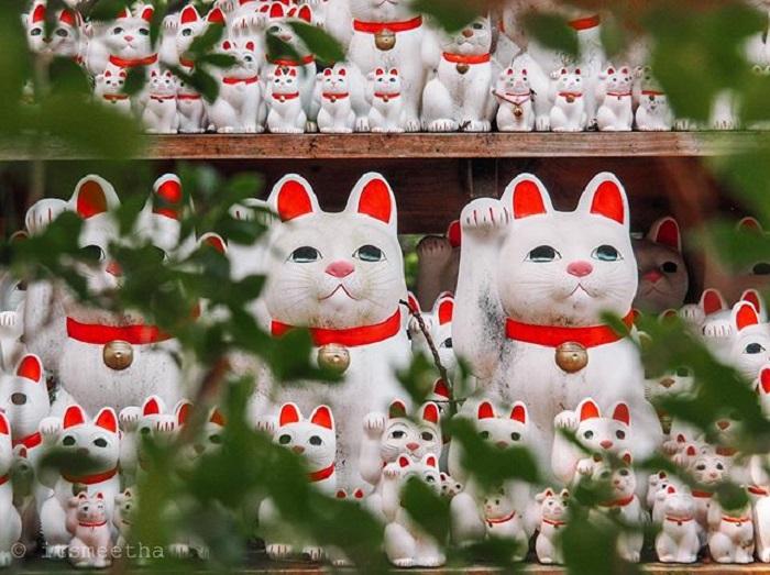 điểm tham quan ở Tokyo - mèo ở đền Gotokuji