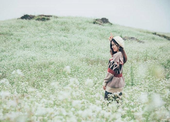 Du lịch Mộc Châu tháng 11 đắm chìm bên những đồi hoa cải trắng đẹp mê hồn