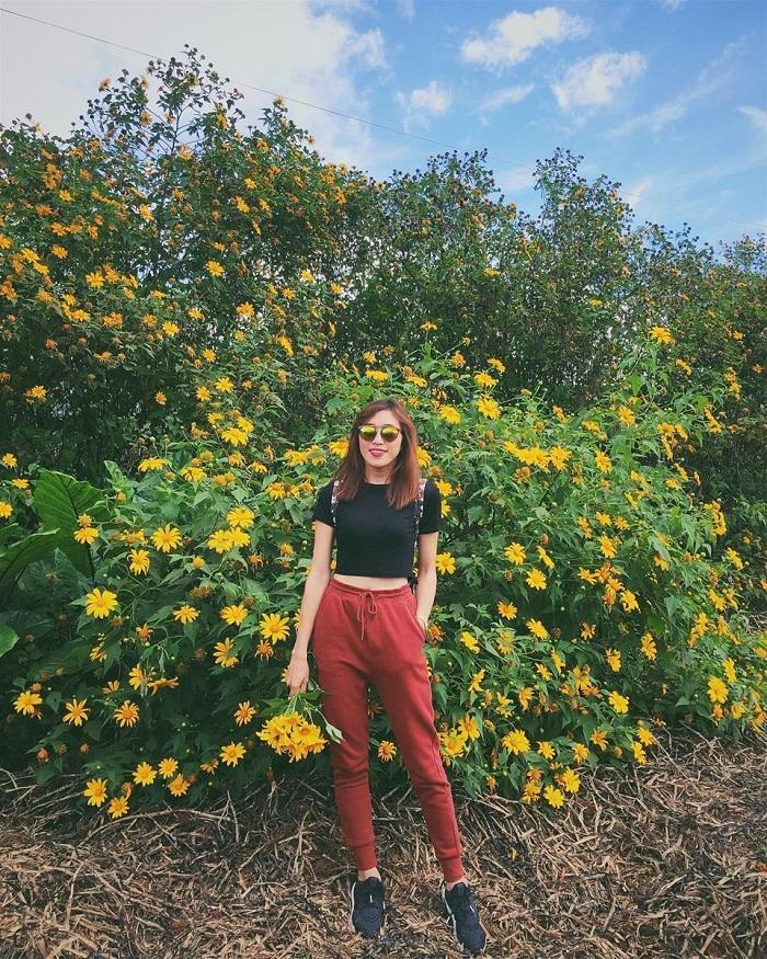 Hoa dã quỳ nở vàng rực rỡ tại  Mộc Châu tháng 11
