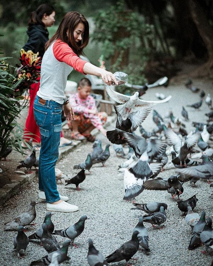 cho bồ câu ăn - trải nghiệm thú vị tại đền Wat Umong
