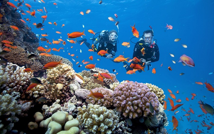 Hon Dam Phu Quoc - snorkeling and watching beautiful coral