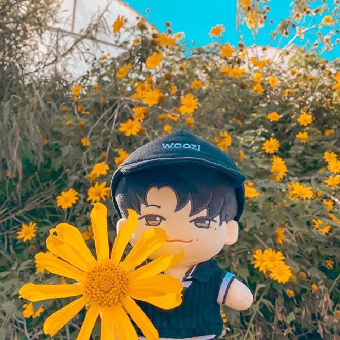 mùa hoa dã quỳ Đà Lạt - cung đường săn hoa