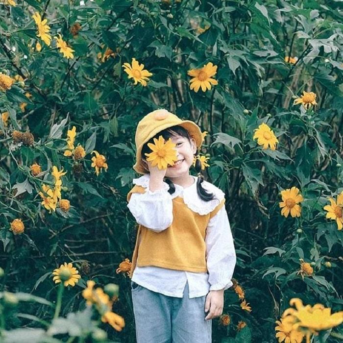 mùa hoa dã quỳ Đà Lạt - check in ấn tượng