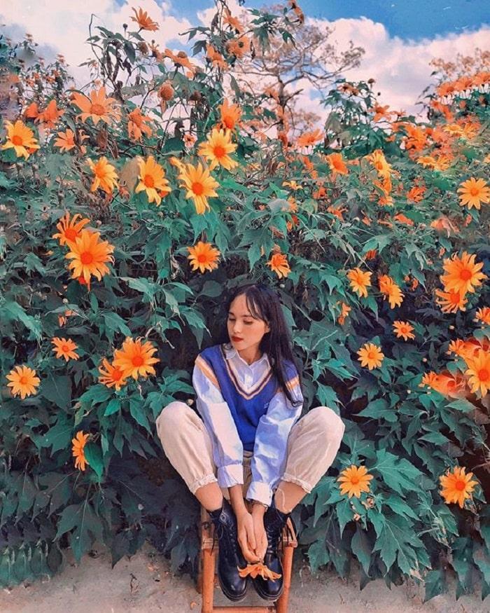 mùa hoa dã quỳ Đà Lạt - đến lúc nở rộ là đẹp nhất