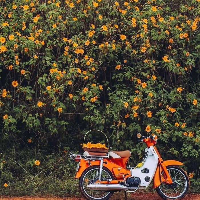 mùa hoa dã quỳ Đà Lạt - phượt ngắm hoa bằng xe máy