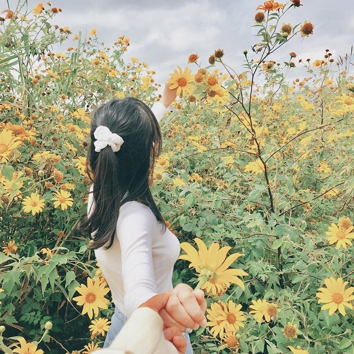 mùa hoa dã quỳ Đà Lạt - thời điểm ngắm đẹp vào mùa khô