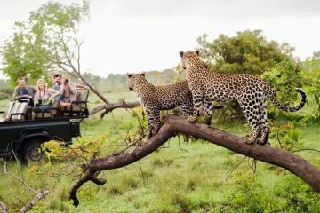 Khám phá thế giới động vật khi du lịch vườn quốc gia Kruger, Nam Phi