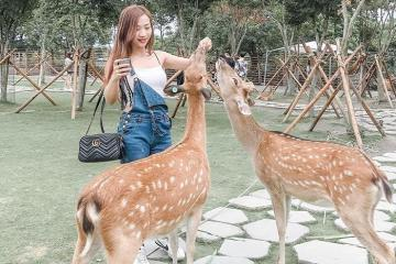 Lạc bước vào Bambi Land Đài Loan ngắm những chú hươu sao đáng yêu