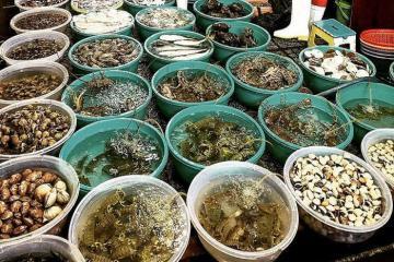 Những địa chỉ mua hải sản ở Đà Nẵng tươi - sạch - rẻ bậc nhất