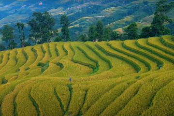 Tháng 10 rồi, Hà Giang vẫn đẹp ngỡ ngàng mùa lúa trên ruộng bậc thang Lùng Vài