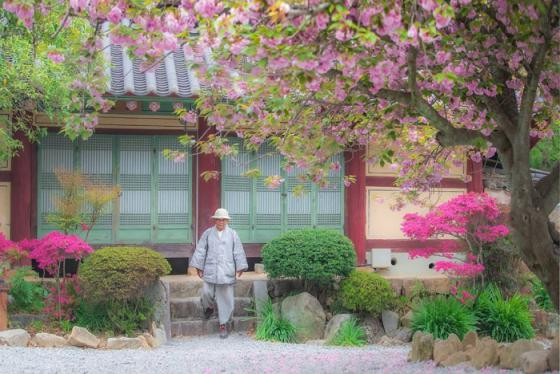 Những ngôi chùa ở Busan cổ kính tuyệt đẹp cho bạn trải nghiệm khó quên