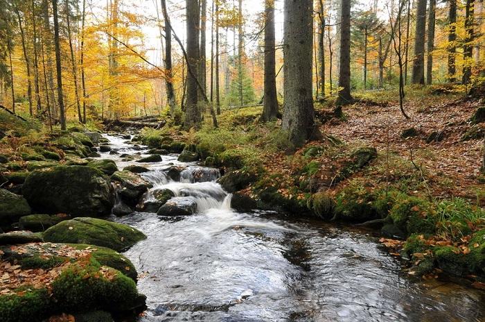 Vườn quốc giaBavarian Forest Du lịch Bavaria