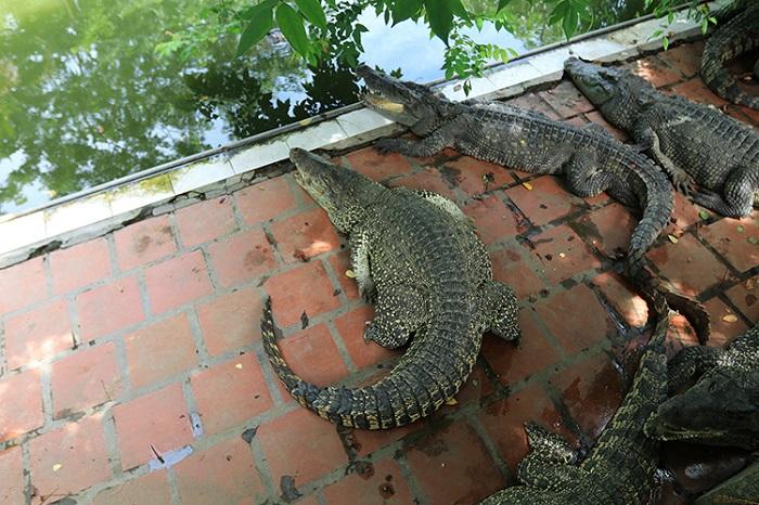 khu du lịch Phù Sa Cần Thơ - trại cá sấu