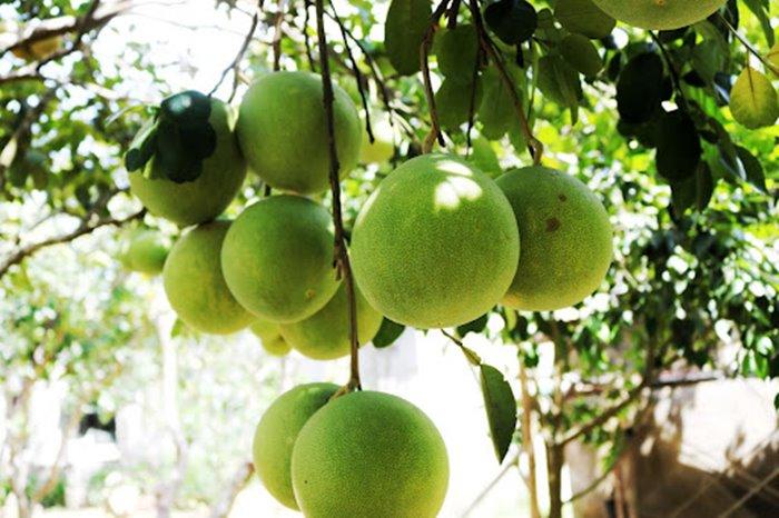 đặc sản mùa thu xứ Huế