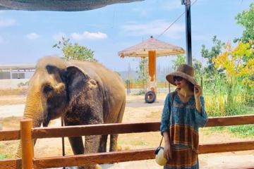 Check-in FLC Zoo Safari Park Quy Nhơn - công viên động vật hoang dã 'mê hoặc' giới trẻ