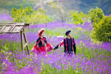 Những vườn hoa đẹp ở Việt Nam lên hình 'xinh nức nở', check in 1 buổi có hình sống ảo cả năm