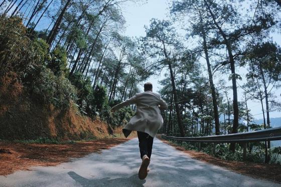 Đây là những rừng thông đẹp ở Việt Nam 'đứng vào là có ngay ảnh đẹp'