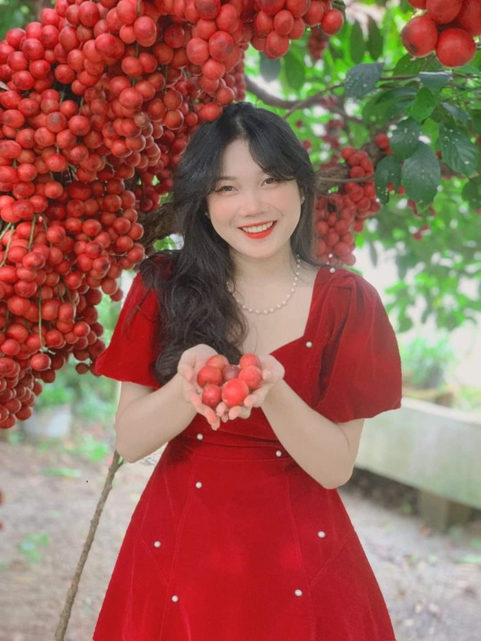 The fruit-laden red trees make visitors excited.Photo: Four Phuong Red Garden.