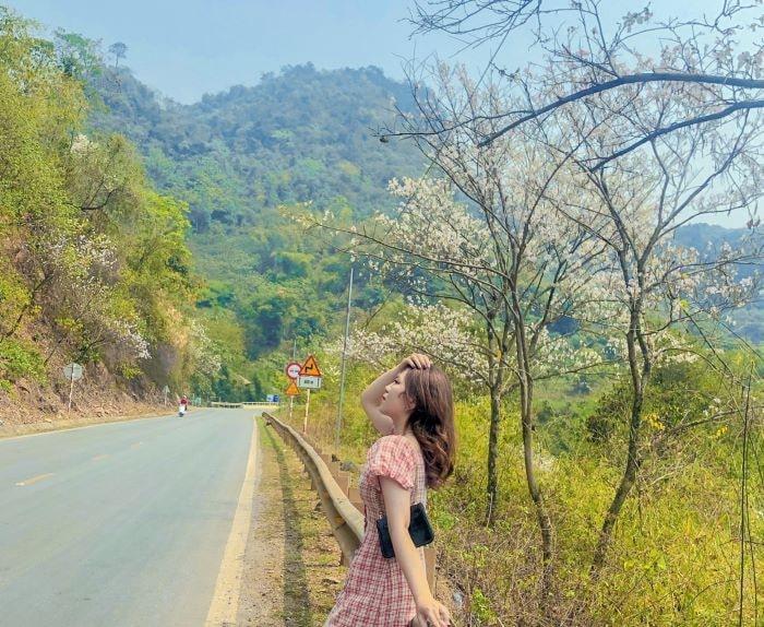 Đường đến vườn hoa nhiệt đới Mộc Châu
